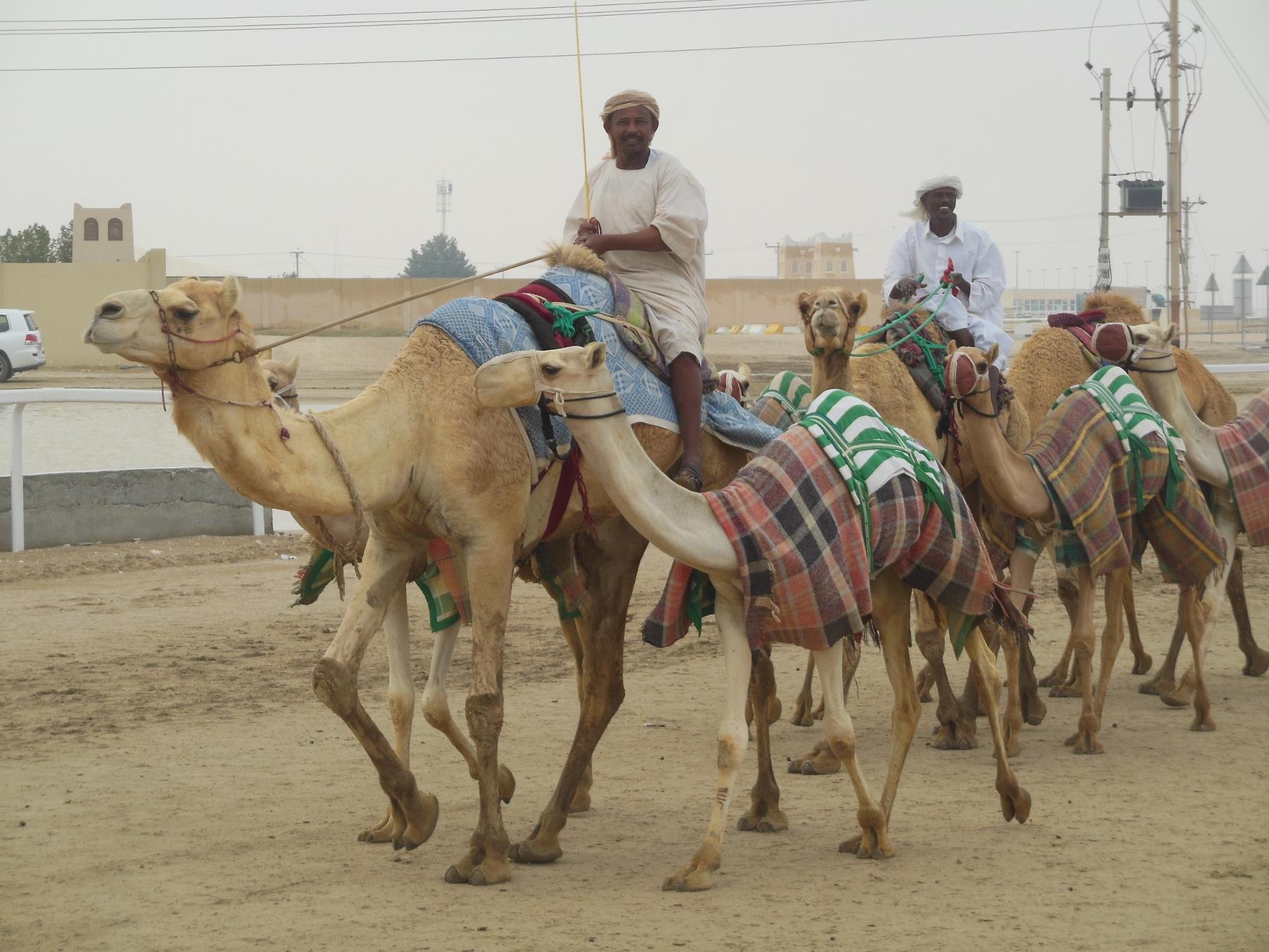 Kamelrennbahn in der Nähe von Doha (1800x1350)